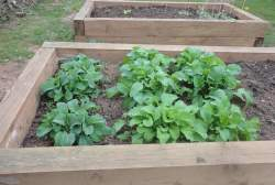 Vegetable beds.